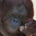 Animals-and-Their-Babies-08-634x721